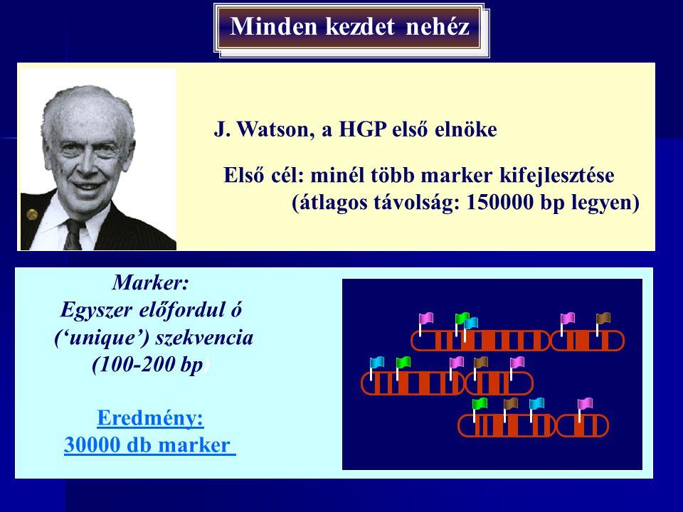 A HUGO Project hierarchikus rendszere A HUGO Project hierarchikus rendszere Nagy felbontás Alacsony felbontás Citogenetikai térképek (kromoszómasáv) Átfedő fragmentumok klónozása Restrikciós térképezés Szekvenálás