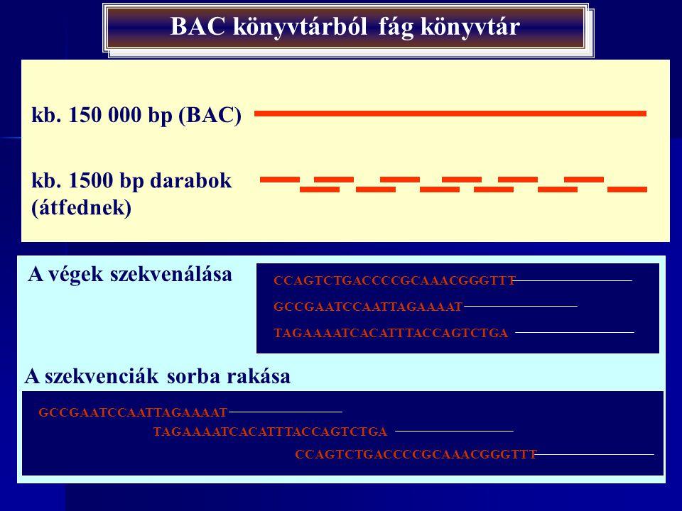 A hierarchikus rendszer felépítése BAC könyvtár: átfedő darabok Következő lépések: 1.