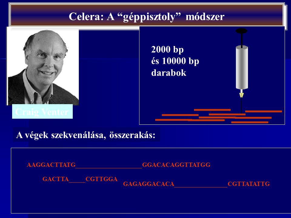 http://www.dnaftb.org/dnaftb/39/concept/index.html Összerakás
