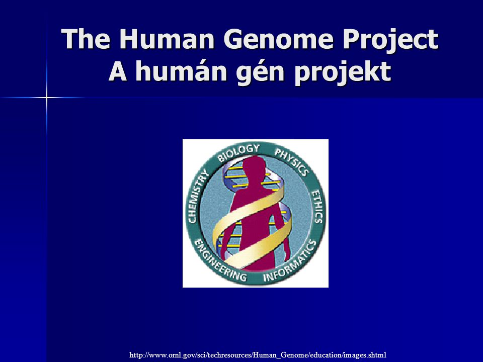 The Human Genome Project A humán gén projekt http://www.ornl.gov/sci/techresources/Human_Genome/education/images.shtml