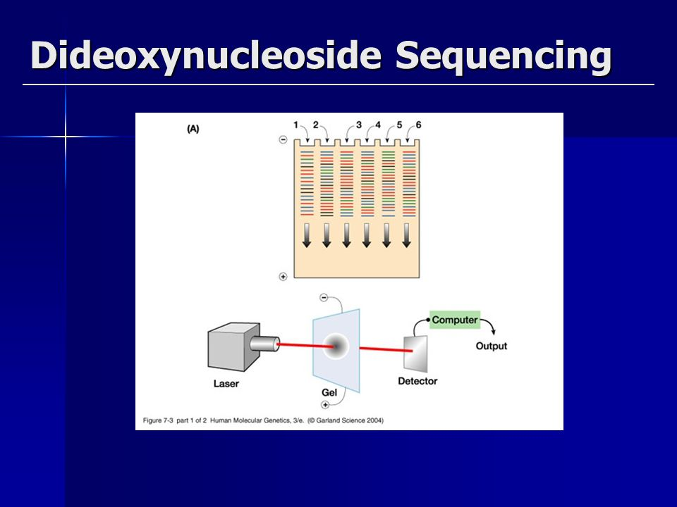 Dideoxynucleoside Sequencing(new)