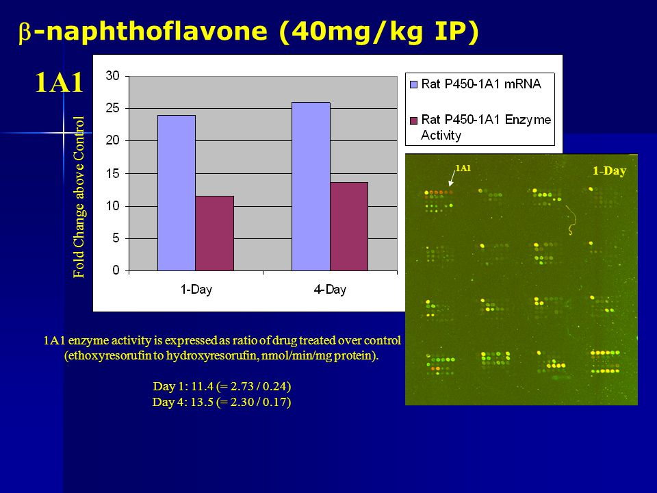 P450 Induction Study Adult Male Sprague-Dawley rats (175-200g) were dosed daily with the following compounds (or vehicle control), and sacrificed at 1