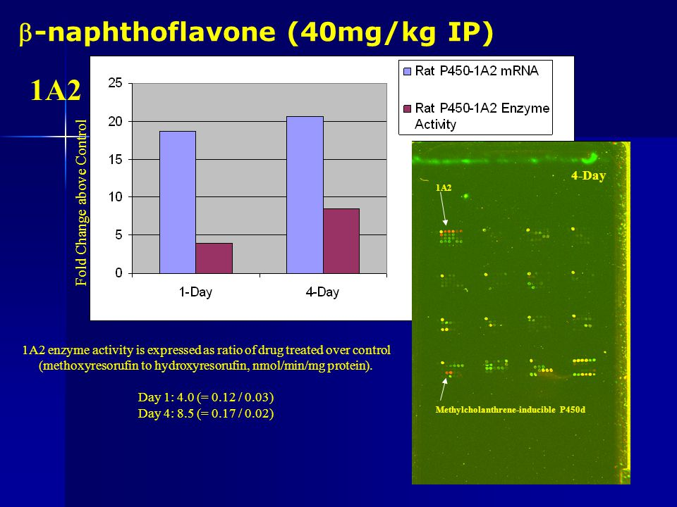 -naphthoflavone (40mg/kg IP) 1A1 enzyme activity is expressed as ratio of drug treated over control (ethoxyresorufin to hydroxyresorufin, nmol/min/mg protein).