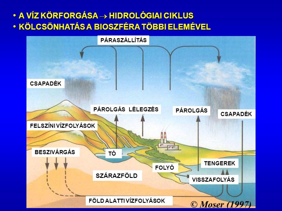 SZÁRAZFÖLD FELSZÍNI VÍZFOLYÁSOK PÁROLGÁS CSAPADÉK LÉLEGZÉSPÁROLGÁS CSAPADÉK PÁRASZÁLLÍTÁS BESZIVÁRGÁS FÖLD ALATTI VÍZFOLYÁSOK TENGEREK FOLYÓ TÓ VISSZAFOLYÁS © Moser (1997) • A VÍZ KÖRFORGÁSA  HIDROLÓGIAI CIKLUS • KÖLCSÖNHATÁS A BIOSZFÉRA TÖBBI ELEMÉVEL