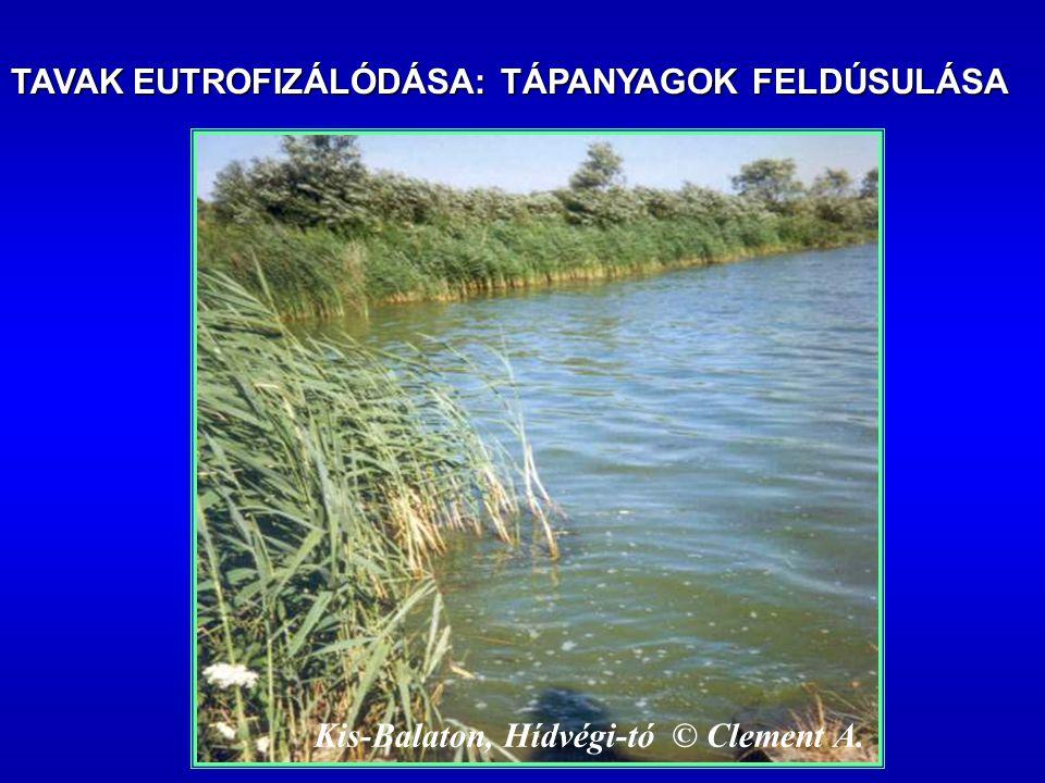 Kis-Balaton, Hídvégi-tó © Clement A. TAVAK EUTROFIZÁLÓDÁSA: TÁPANYAGOK FELDÚSULÁSA