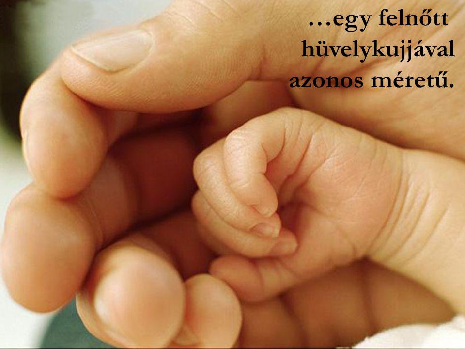 10 hetes korában a magzat már az emberi lény kicsinyített mása…