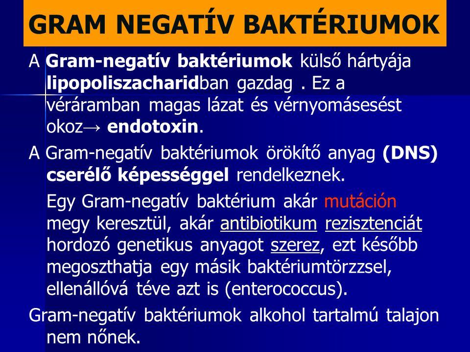 GRAM NEGATÍV BAKTÉRIUMOK A Gram-negatív baktériumok külső hártyája lipopoliszacharidban gazdag. Ez a véráramban magas lázat és vérnyomásesést okoz → e