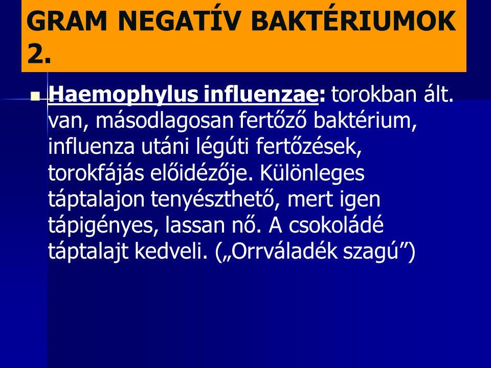 GRAM NEGATÍV BAKTÉRIUMOK 2.   Haemophylus influenzae: torokban ált. van, másodlagosan fertőző baktérium, influenza utáni légúti fertőzések, torokfáj