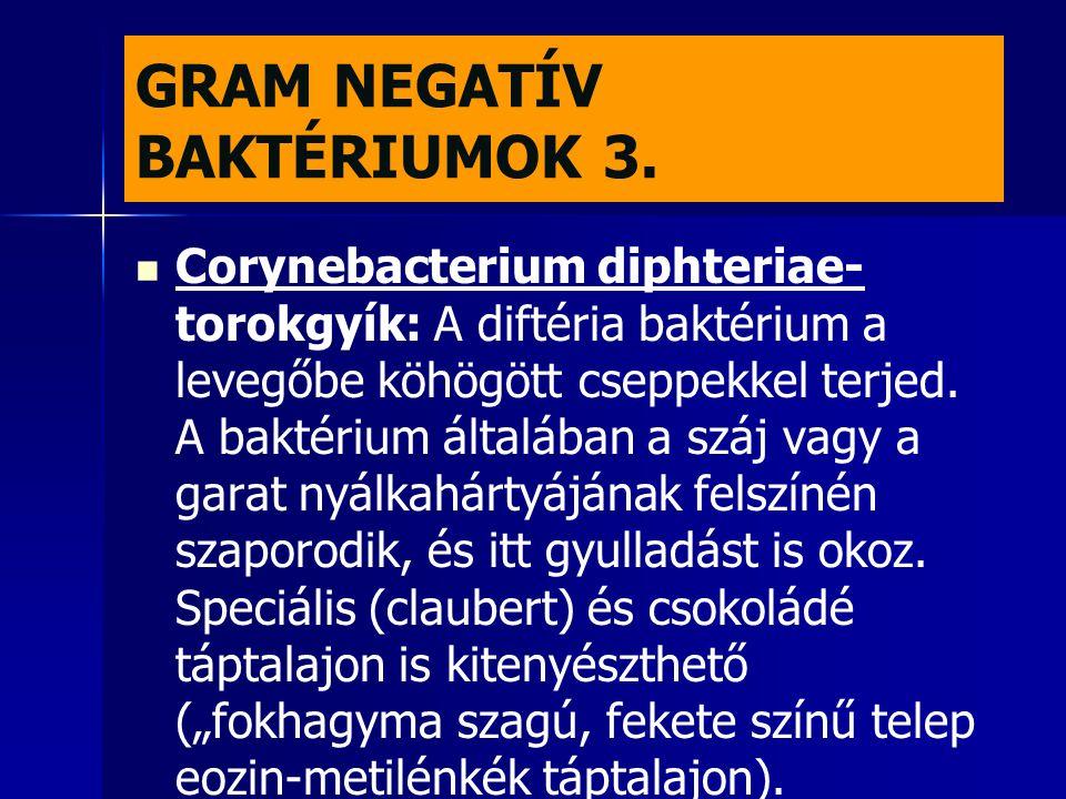 GRAM NEGATÍV BAKTÉRIUMOK 3.   Corynebacterium diphteriae- torokgyík: A diftéria baktérium a levegőbe köhögött cseppekkel terjed. A baktérium általáb
