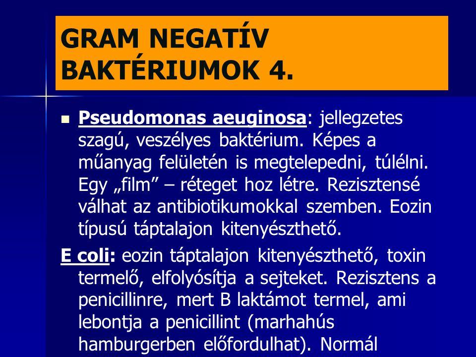 GRAM NEGATÍV BAKTÉRIUMOK 4.   Pseudomonas aeuginosa: jellegzetes szagú, veszélyes baktérium. Képes a műanyag felületén is megtelepedni, túlélni. Egy