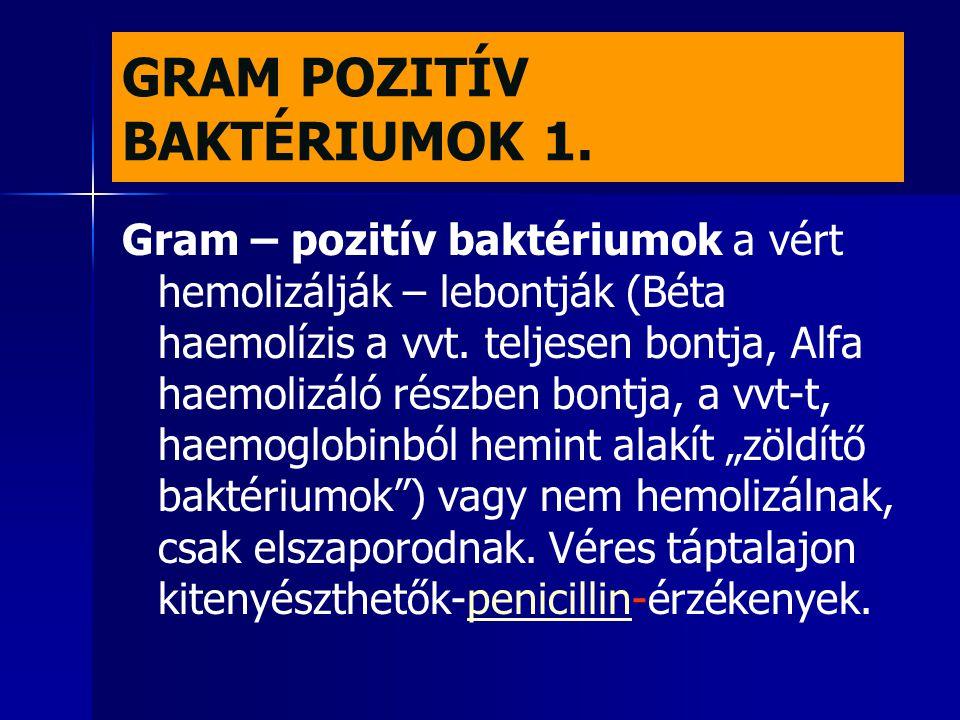 GRAM POZITÍV BAKTÉRIUMOK 1. Gram – pozitív baktériumok a vért hemolizálják – lebontják (Béta haemolízis a vvt. teljesen bontja, Alfa haemolizáló részb