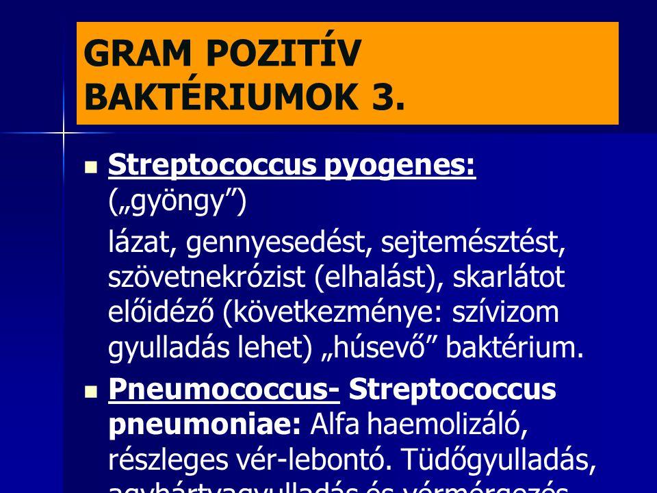 """GRAM POZITÍV BAKTÉRIUMOK 3.   Streptococcus pyogenes: (""""gyöngy"""") lázat, gennyesedést, sejtemésztést, szövetnekrózist (elhalást), skarlátot előidéző"""