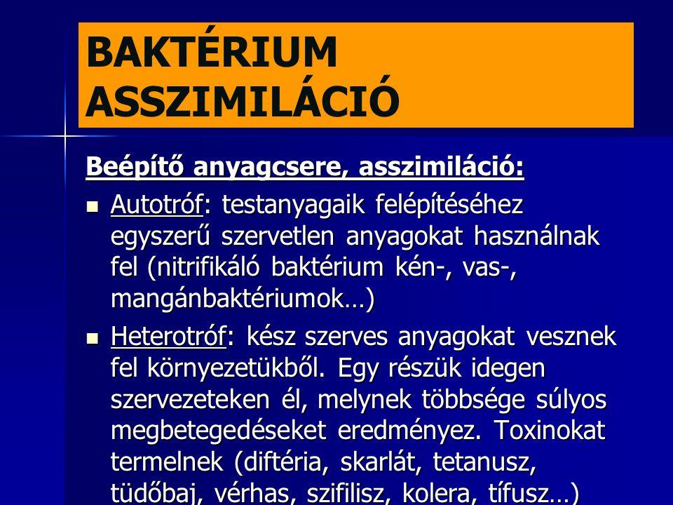 BAKTÉRIUM ASSZIMILÁCIÓ Beépítő anyagcsere, asszimiláció:  Autotróf: testanyagaik felépítéséhez egyszerű szervetlen anyagokat használnak fel (nitrifik