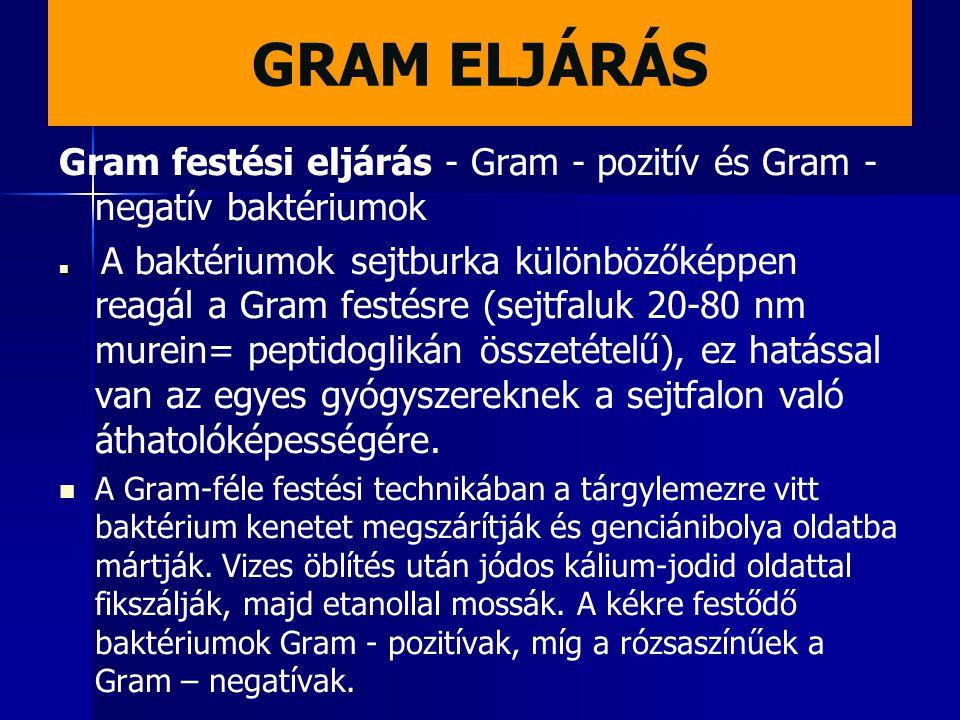 GRAM ELJÁRÁS Gram festési eljárás - Gram - pozitív és Gram - negatív baktériumok   A baktériumok sejtburka különbözőképpen reagál a Gram festésre (s