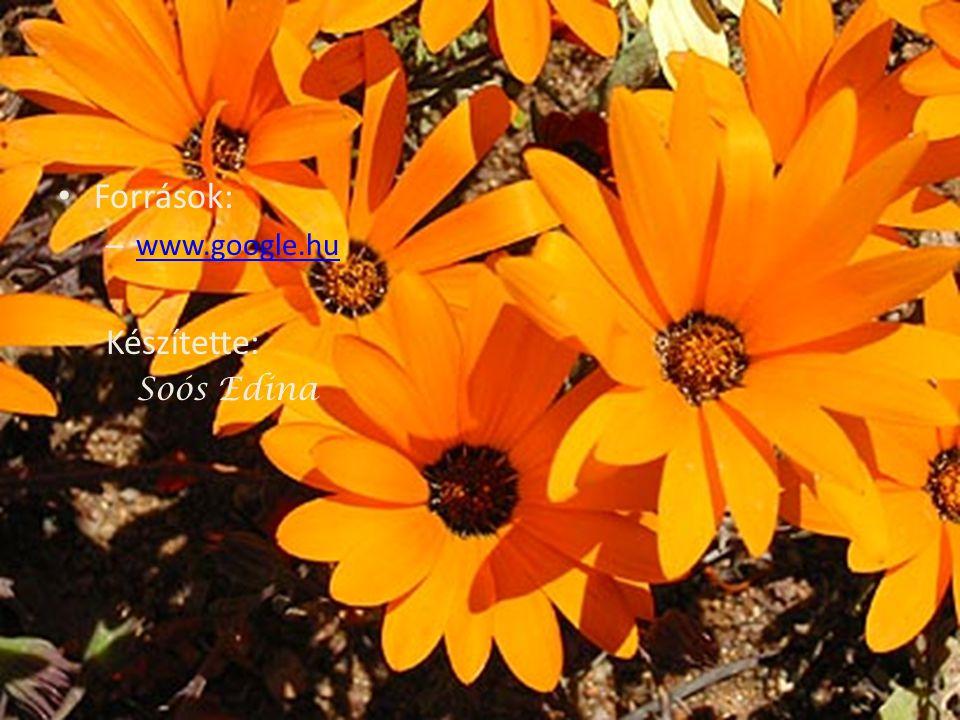 • Források: – www.google.hu www.google.hu Készítette: Soós Edina