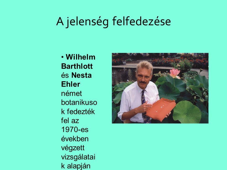 A jelenség felfedezése • Wilhelm Barthlott és Nesta Ehler német botanikuso k fedezték fel az 1970-es években végzett vizsgálatai k alapján •a leveleke