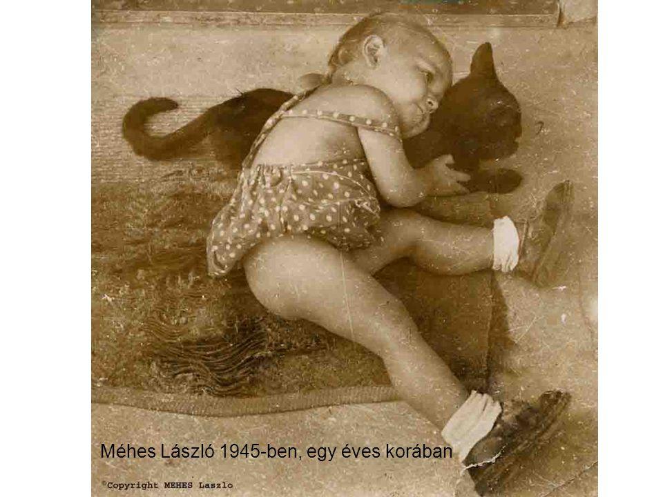 Méhes László 1950-ben