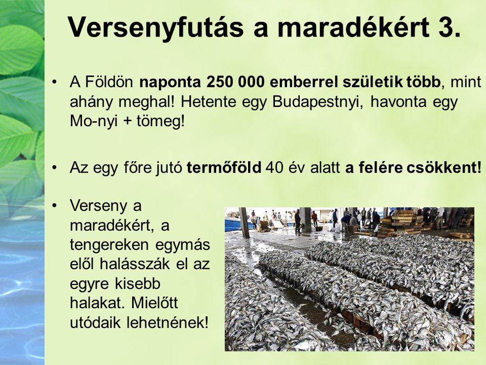 Versenyfutás a maradékért 3. •A Földön naponta 250 000 emberrel születik több, mint ahány meghal! Hetente egy Budapestnyi, havonta egy Mo-nyi + tömeg!