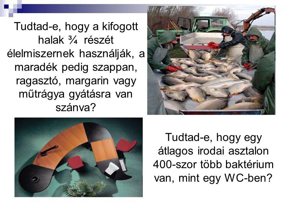 Tudtad-e, hogy a kifogott halak ¾ részét élelmiszernek használják, a maradék pedig szappan, ragasztó, margarin vagy műtrágya gyátásra van szánva.
