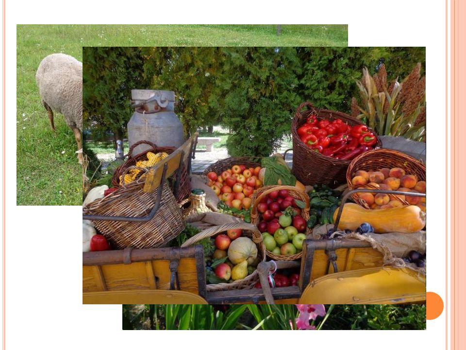 Az emberek igazi falusiak módjára vetnek, ültetnek és állatokat tenyésztenek.