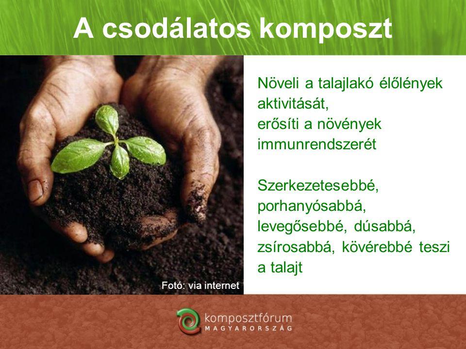 A csodálatos komposzt Növeli a talajlakó élőlények aktivitását, erősíti a növények immunrendszerét Szerkezetesebbé, porhanyósabbá, levegősebbé, dúsabb