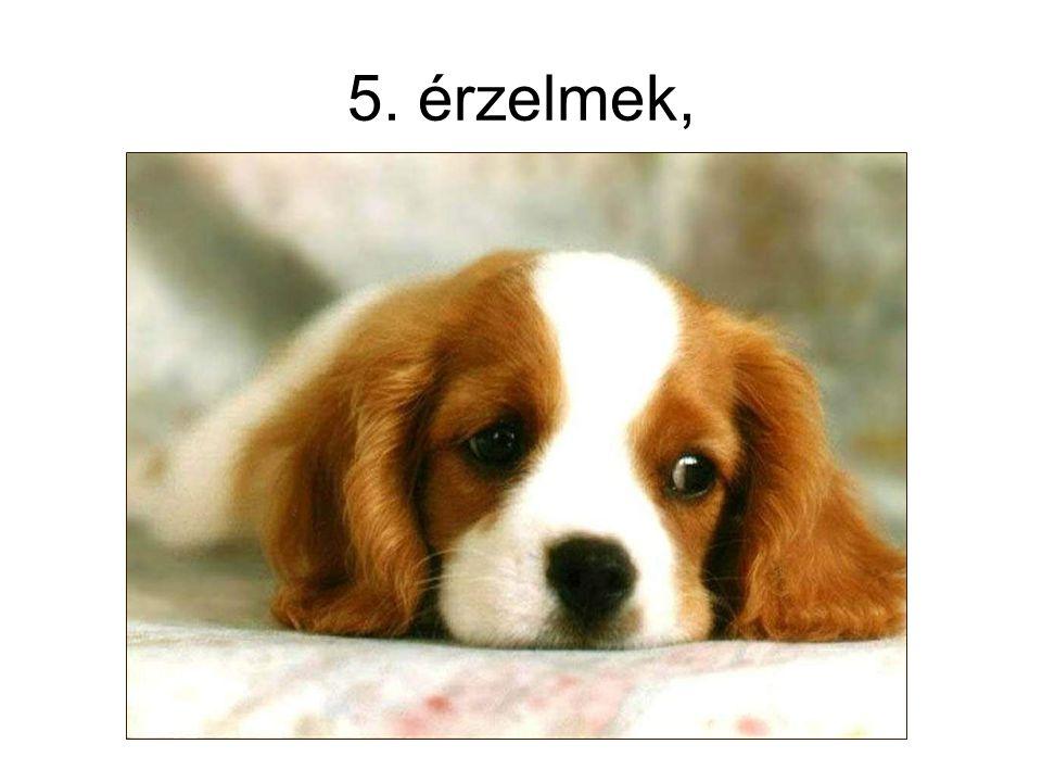 5. érzelmek,