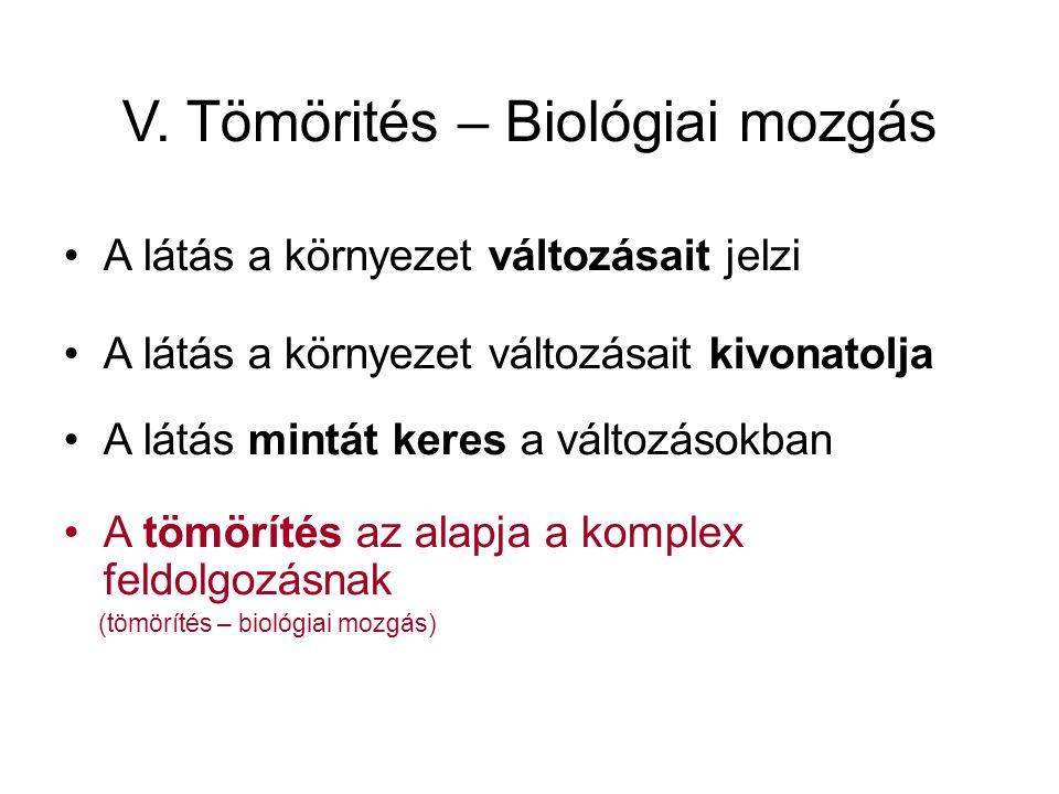 V. Tömörités – Biológiai mozgás •A látás a környezet változásait jelzi •A látás a környezet változásait kivonatolja •A látás mintát keres a változások