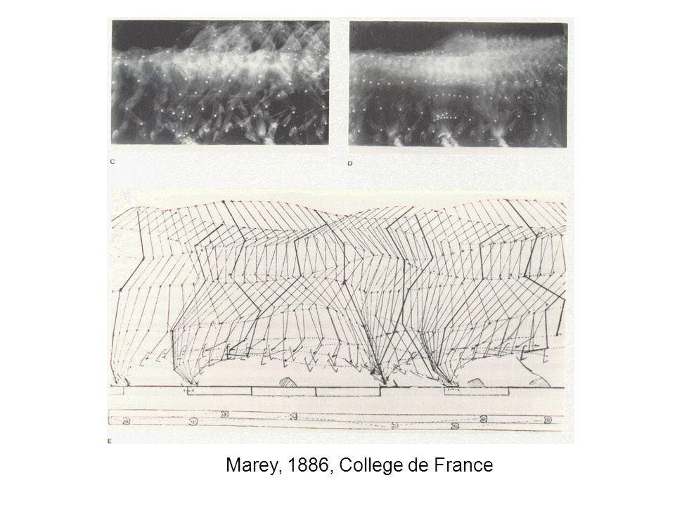 Marey, 1886, College de France