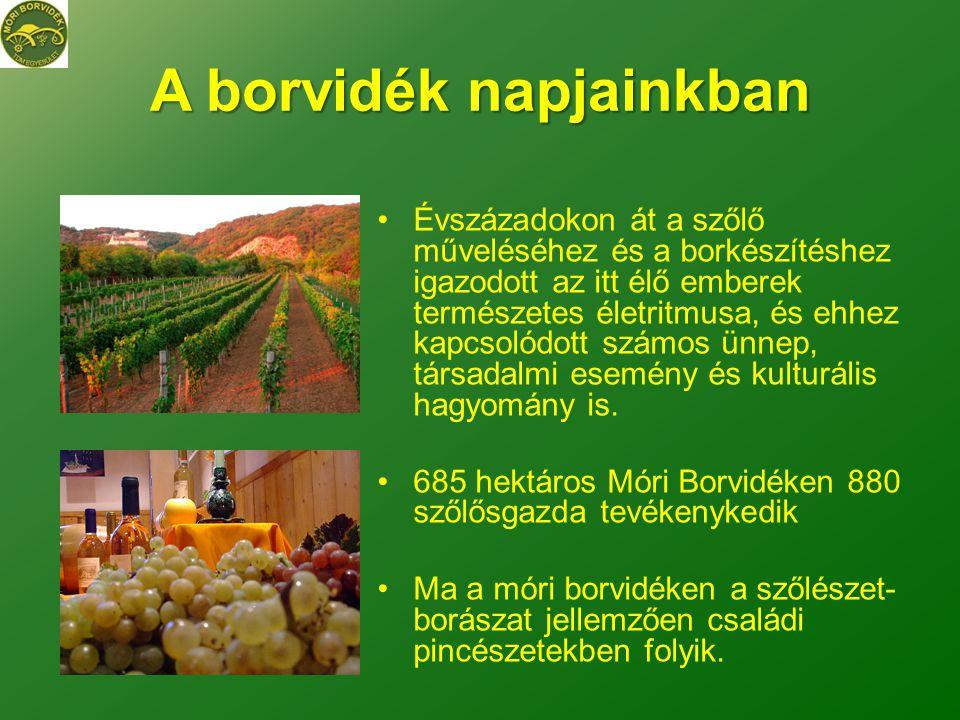 A borvidék napjainkban •Évszázadokon át a szőlő műveléséhez és a borkészítéshez igazodott az itt élő emberek természetes életritmusa, és ehhez kapcsolódott számos ünnep, társadalmi esemény és kulturális hagyomány is.