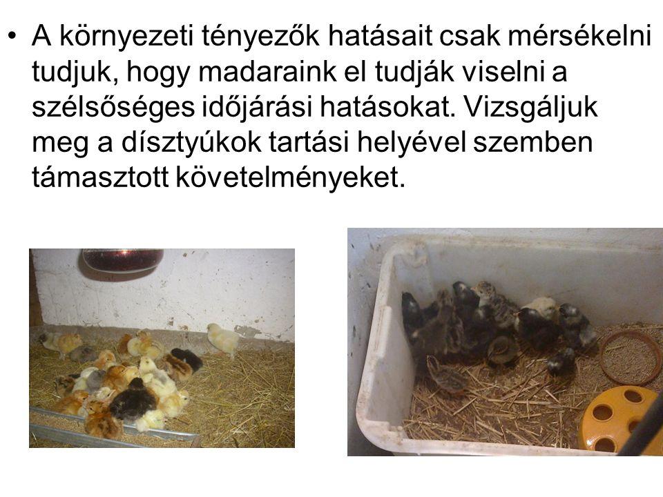 •A környezeti tényezők hatásait csak mérsékelni tudjuk, hogy madaraink el tudják viselni a szélsőséges időjárási hatásokat. Vizsgáljuk meg a dísztyúko