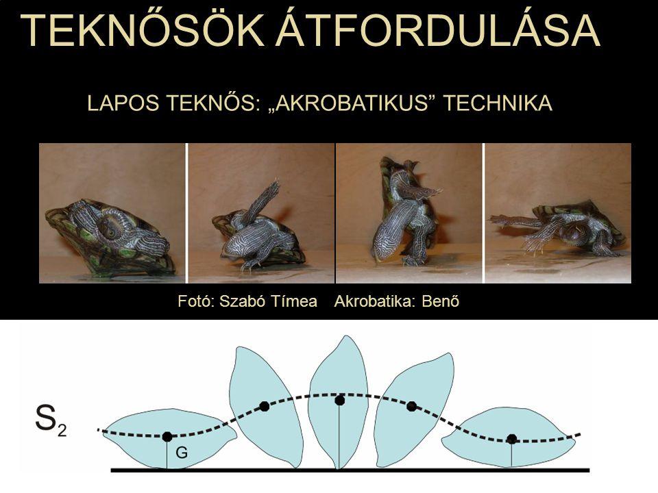 """Fotó: Szabó Tímea Akrobatika: Benő TEKNŐSÖK ÁTFORDULÁSA LAPOS TEKNŐS: """"AKROBATIKUS"""" TECHNIKA"""