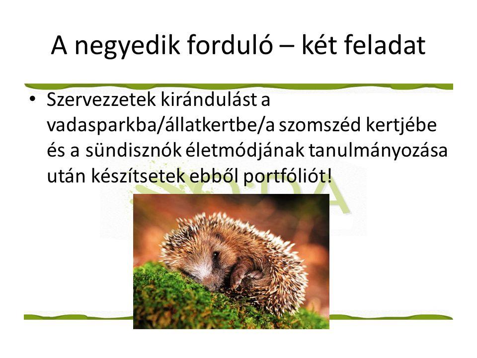A negyedik forduló – két feladat • Szervezzetek kirándulást a vadasparkba/állatkertbe/a szomszéd kertjébe és a sündisznók életmódjának tanulmányozása után készítsetek ebből portfóliót!
