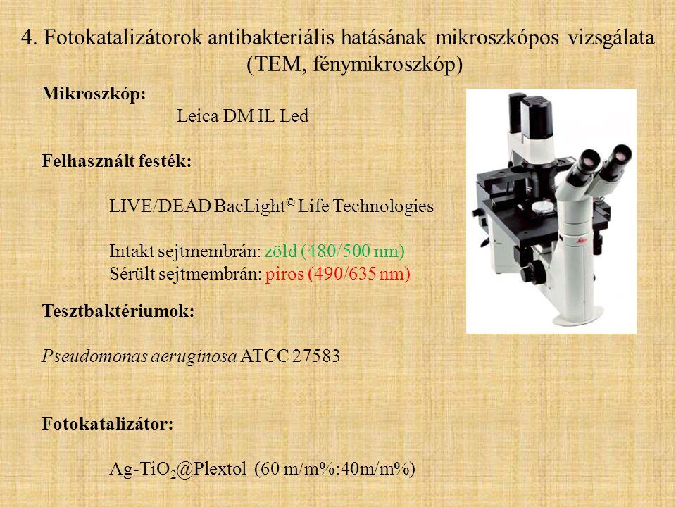 Mikroszkóp: Leica DM IL Led Felhasznált festék: LIVE/DEAD BacLight © Life Technologies Intakt sejtmembrán: zöld (480/500 nm) Sérült sejtmembrán: piros