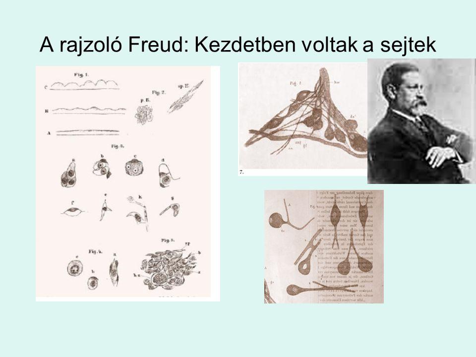A rajzoló Freud: Kezdetben voltak a sejtek