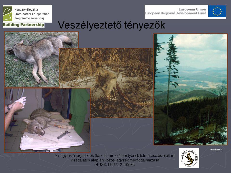 A nagytestű ragadozók (farkas, hiúz) élőhelyének felmérése és élettani vizsgálatuk alapján közös jegyzék megfogalmazása HUSK/1101/2.2.1/0036 Veszélyez
