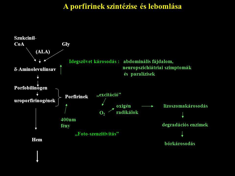 Szukcinil- CoA Gly  -Aminolevulinsav Porfobilinogen uroporfirinogének Porfirinek Idegszövet károsodás : abdominális fájdalom, neuropszichiátriai szim