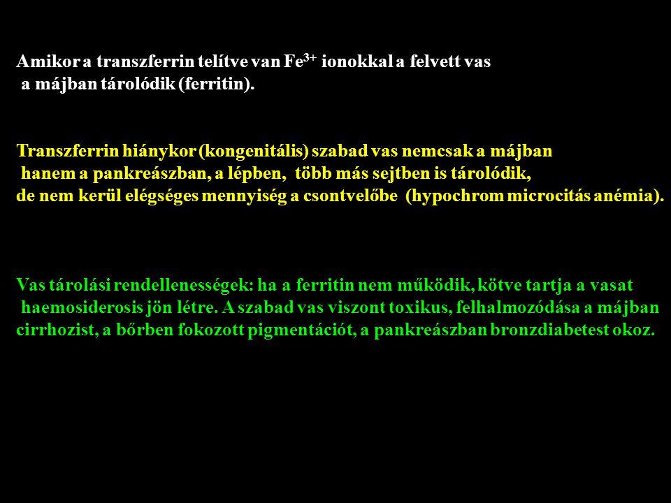Amikor a transzferrin telítve van Fe 3+ ionokkal a felvett vas a májban tárolódik (ferritin). Transzferrin hiánykor (kongenitális) szabad vas nemcsak