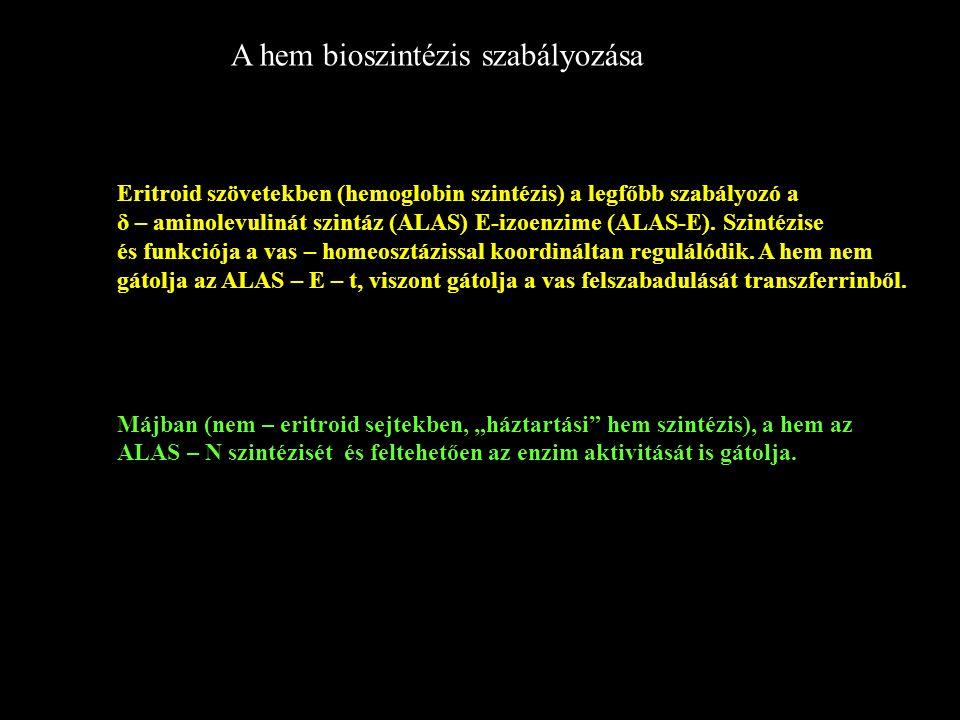 A hem bioszintézis szabályozása Eritroid szövetekben (hemoglobin szintézis) a legfőbb szabályozó a δ – aminolevulinát szintáz (ALAS) E-izoenzime (ALAS