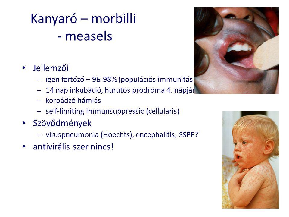 Kanyaró – morbilli - measels • Jellemzői – igen fertőző – 96-98% (populációs immunitás kell) – 14 nap inkubáció, hurutos prodroma 4. napján kiütések –