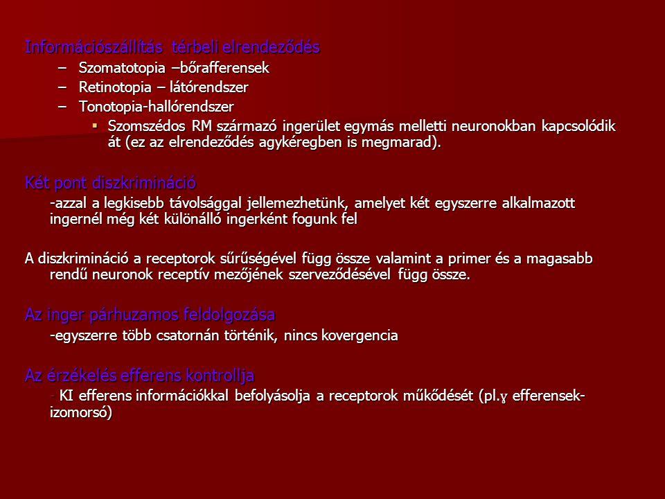 Információszállítás térbeli elrendeződés –Szomatotopia –bőrafferensek –Retinotopia – látórendszer –Tonotopia-hallórendszer  Szomszédos RM származó in