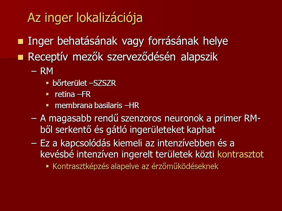 Az inger lokalizációja  Inger behatásának vagy forrásának helye  Receptív mezők szerveződésén alapszik –RM  bőrterület –SZSZR  retina –FR  membrana basilaris –HR –A magasabb rendű szenzoros neuronok a primer RM- ből serkentő és gátló ingerületeket kaphat –Ez a kapcsolódás kiemeli az intenzívebben és a kevésbé intenzíven ingerelt területek közti kontrasztot  Kontrasztképzés alapelve az érzőműködéseknek