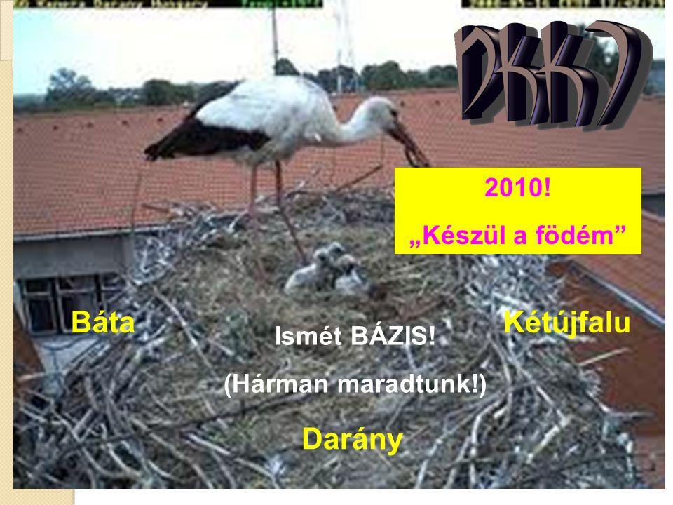 """2010! """"Készül a födém"""" Ismét BÁZIS! (Hárman maradtunk!) BátaKétújfalu Darány"""
