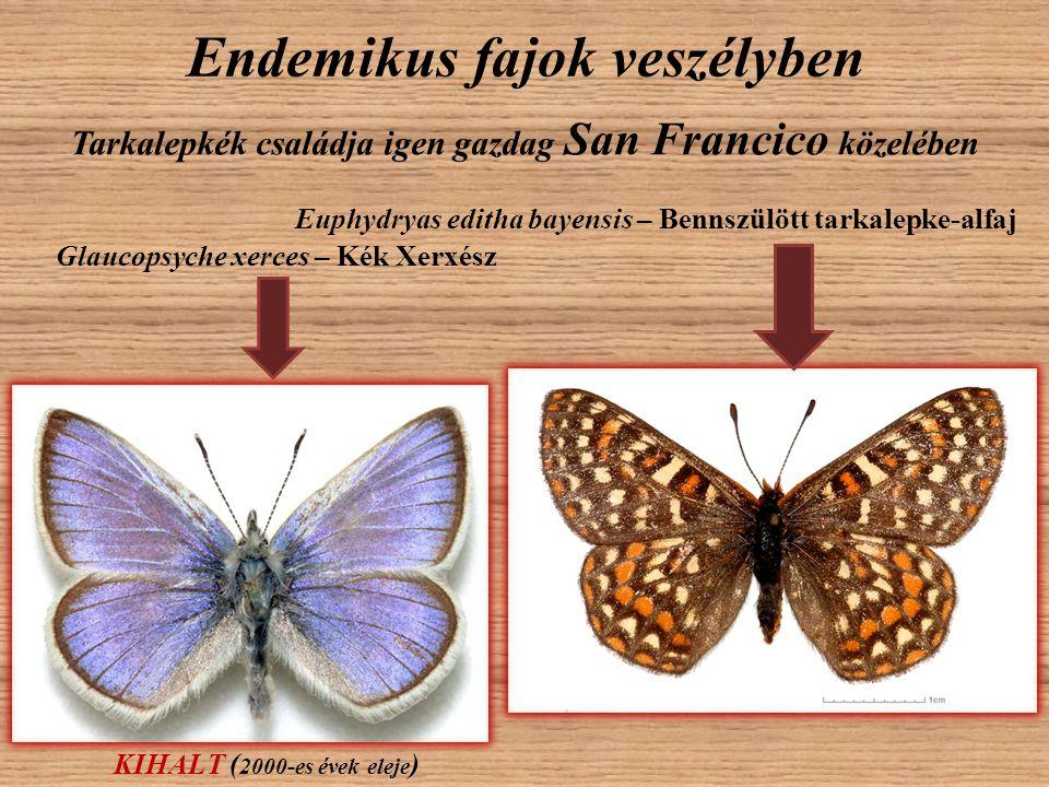 Endemikus fajok veszélyben Tarkalepkék családja igen gazdag San Francico közelében Glaucopsyche xerces – Kék Xerxész KIHALT ( 2000-es évek eleje ) Eup