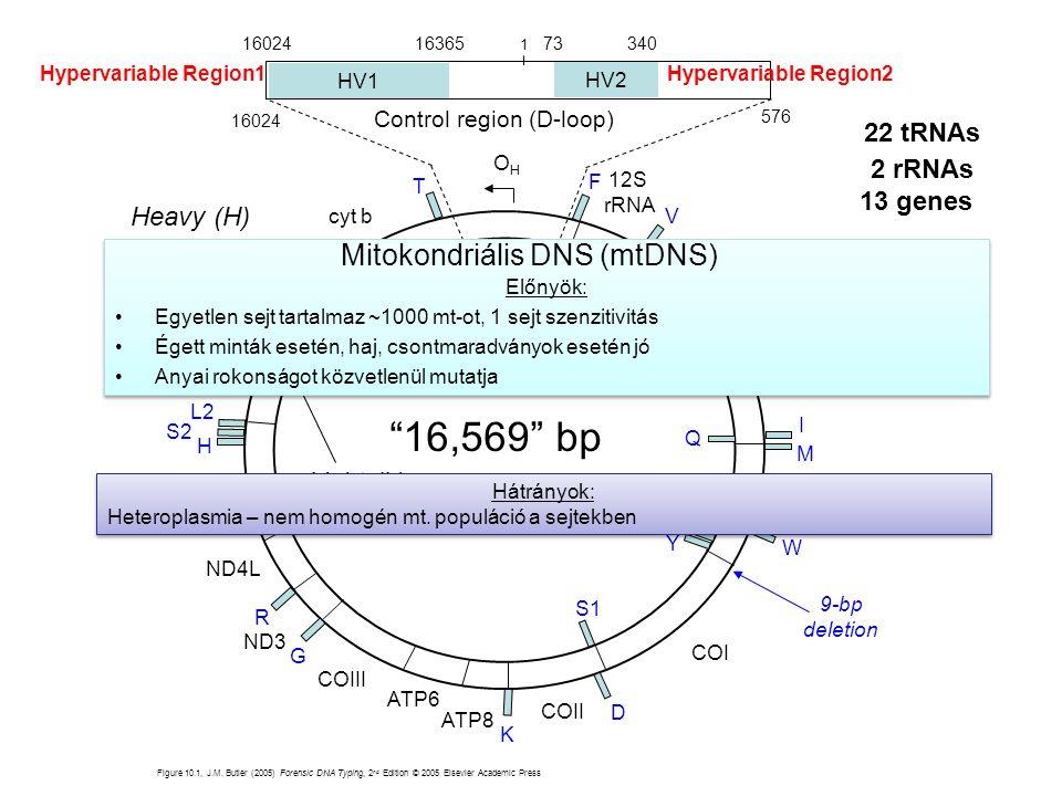 Heavy (H) strand Light (L) strand Figure 10.1, J.M. Butler (2005) Forensic DNA Typing, 2 nd Edition © 2005 Elsevier Academic Press Hypervariable Regio