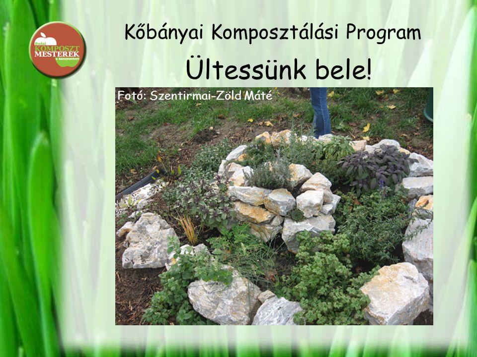 Kőbányai Komposztálási Program Ültessünk bele! Fotó: Szentirmai-Zöld Máté