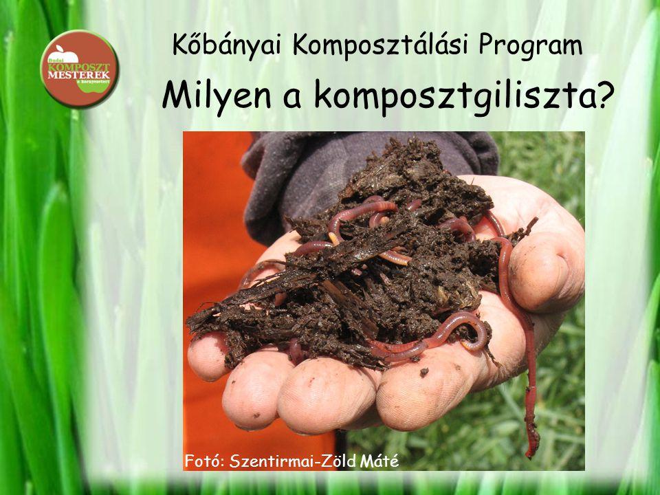 Kőbányai Komposztálási Program Milyen a komposztgiliszta? Fotó: Szentirmai-Zöld Máté