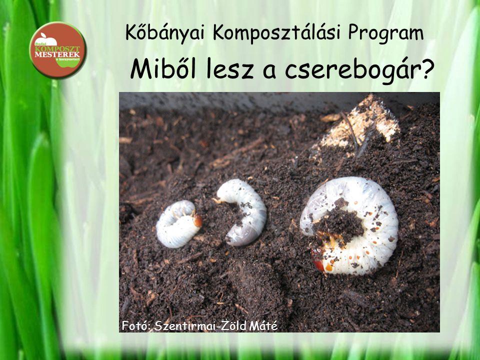 Kőbányai Komposztálási Program Miből lesz a cserebogár? Fotó: Szentirmai-Zöld Máté