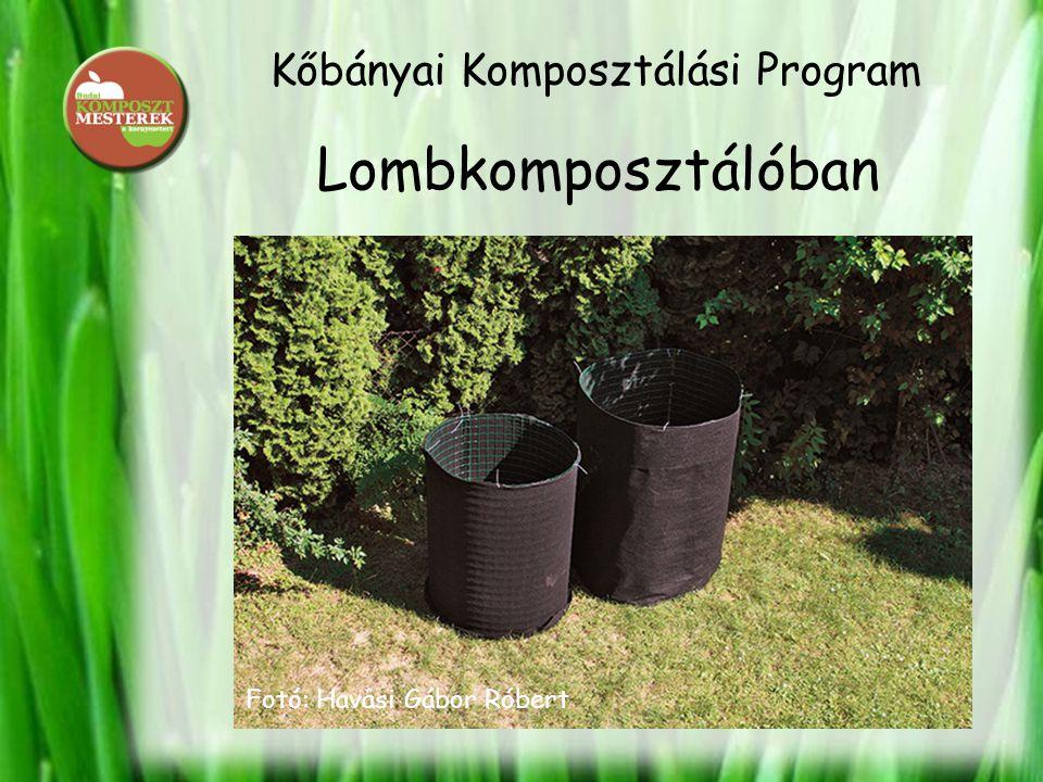 Kőbányai Komposztálási Program Lombkomposztálóban Fotó: Havasi Gábor Róbert