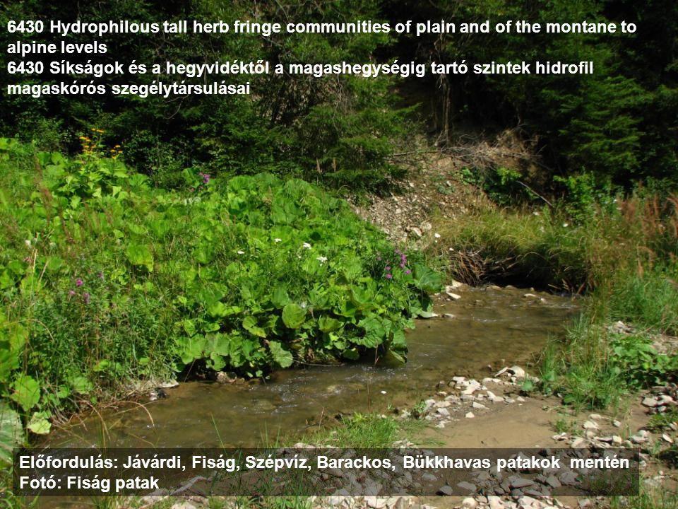 6430 Hydrophilous tall herb fringe communities of plain and of the montane to alpine levels 6430 Síkságok és a hegyvidéktől a magashegységig tartó szi