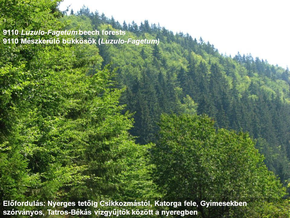 9110 Luzulo-Fagetum beech forests 9110 Mészkerülő bükkösök (Luzulo-Fagetum) Előfordulás: Nyerges tetőig Csíkkozmástól, Katorga fele, Gyímesekben szórv